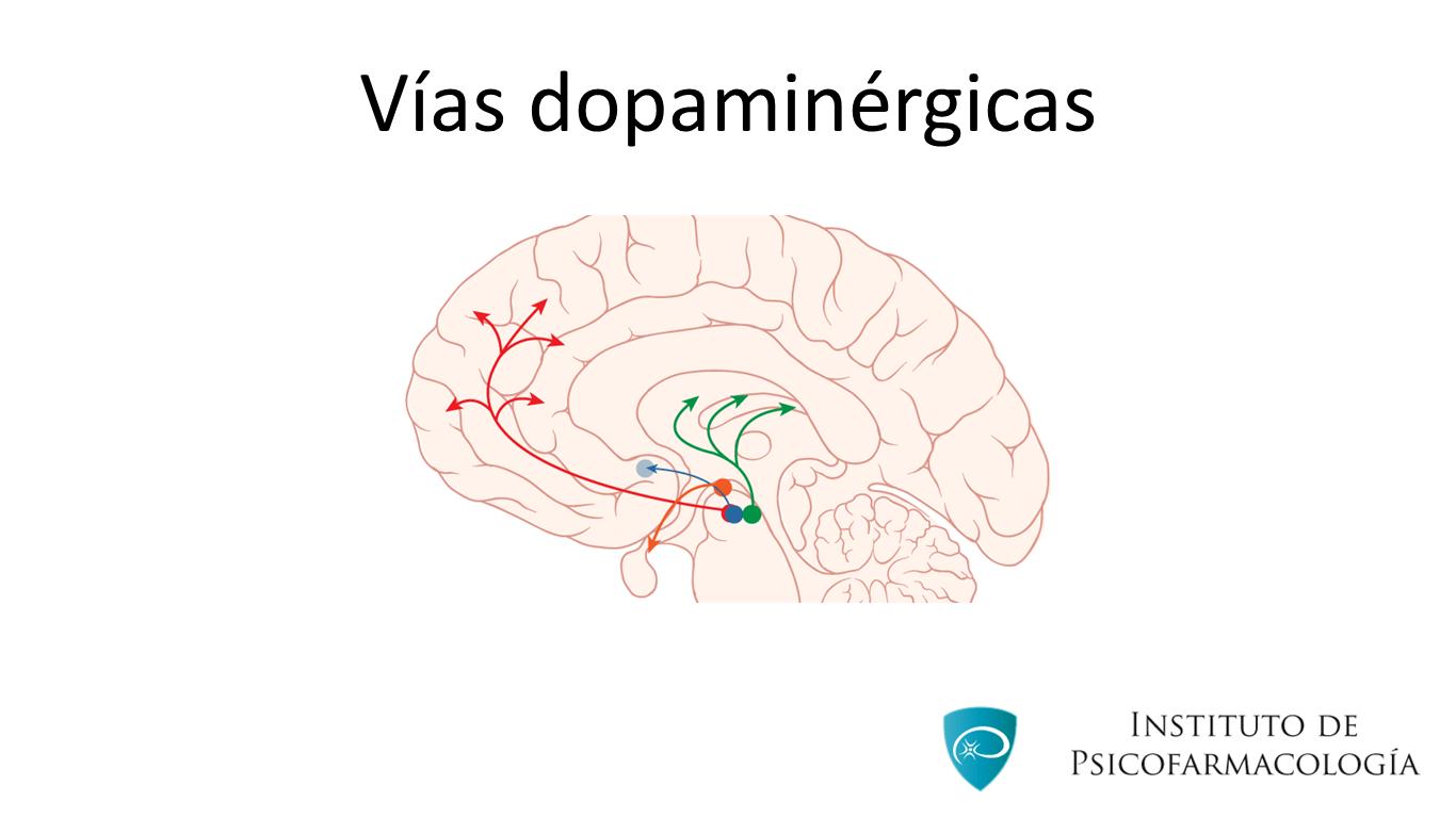 Vías dopaminérgicas y antipsicóticos - Instituto de Psicofarmacología